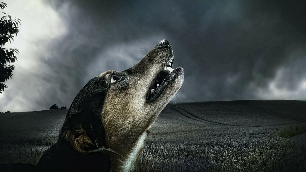 dogstorm3