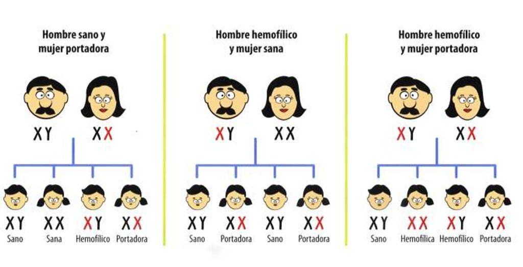 Vías de transmisión de la hemofilia