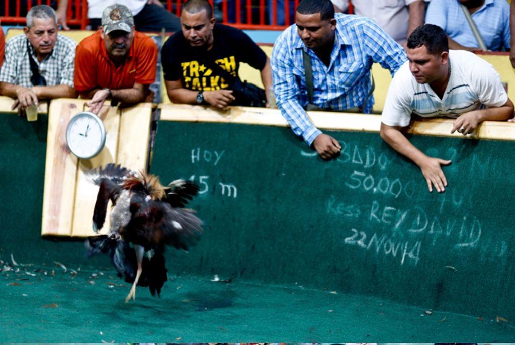 Pelea de gallos en Venezuela