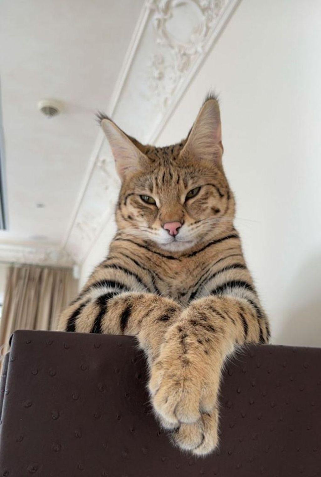 Gato de Alix
