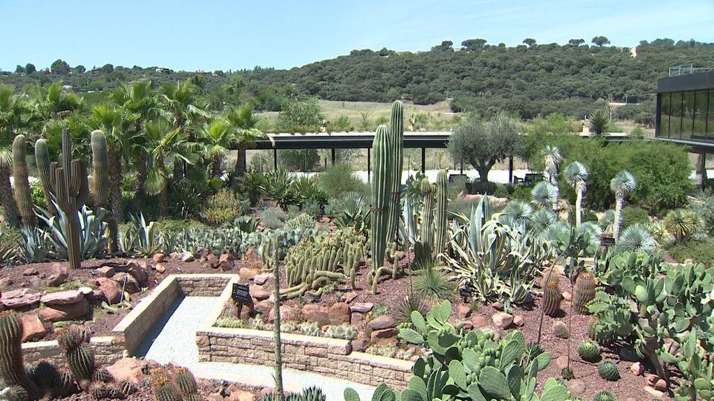 Un jardín de cactus