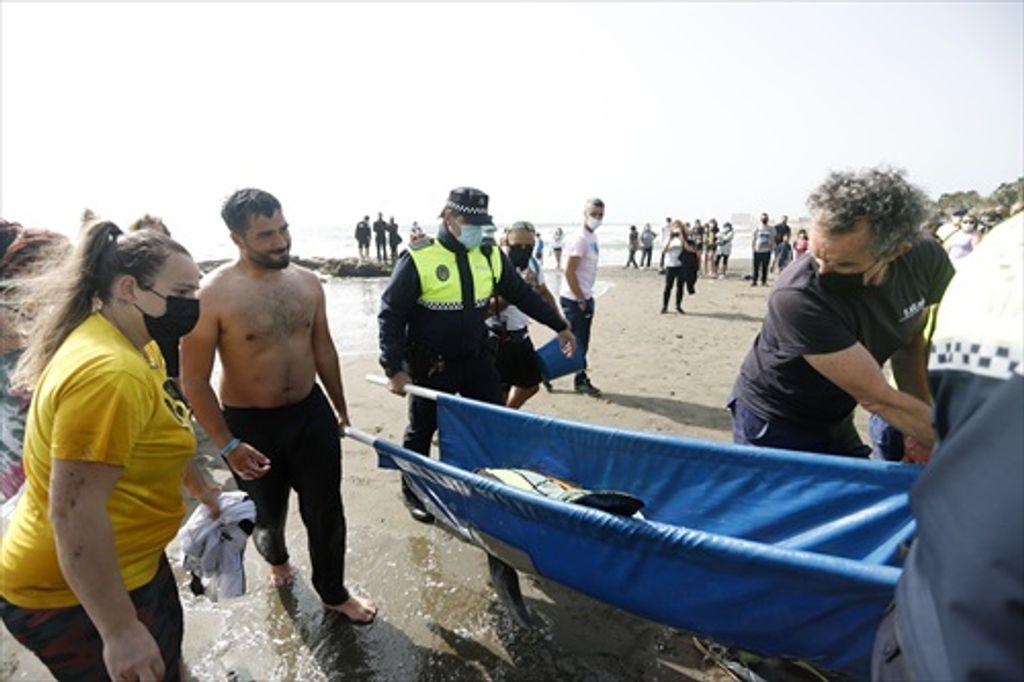 Los técnicos del Centro de recuperación de Especies Marinas Amenazadas se llevan al delfín