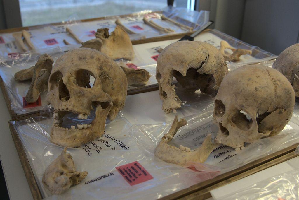 Huesos para su estudio de ADN.