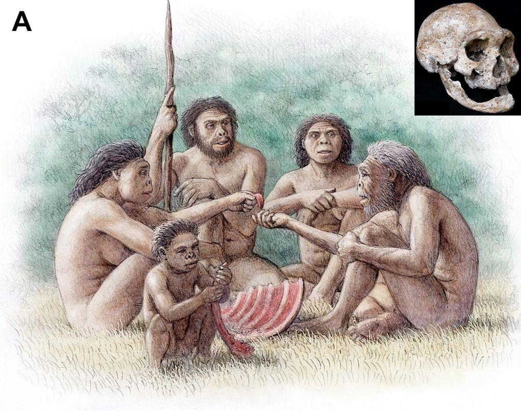 Homínidos de Dmanisi que cuidan y alimentan a un anciano desdentado.