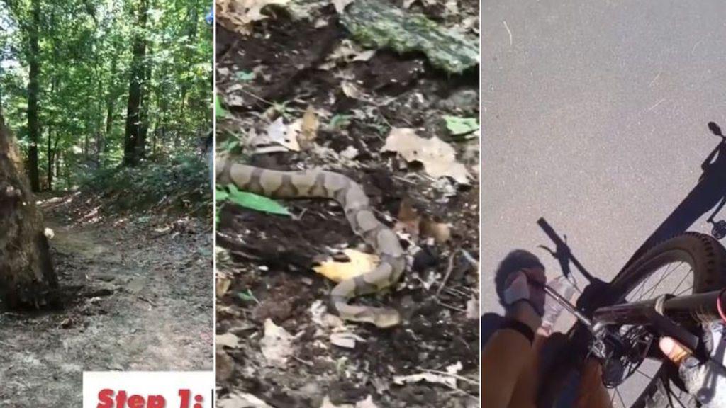 """Un ciclista busca un antídoto de urgencia tras ser mordido por una serpiente: """"Es venenosa"""""""