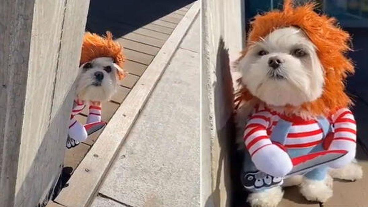 Se vuelve viral en Tik Tok el 'perro Chucky': el terror recorre las calles