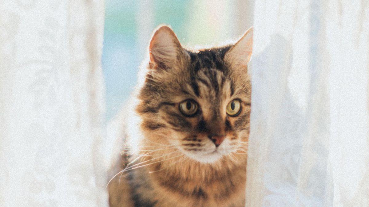 Los mininos y la edad: cuáles son las enfermedades más comunes en los gatos ancianos