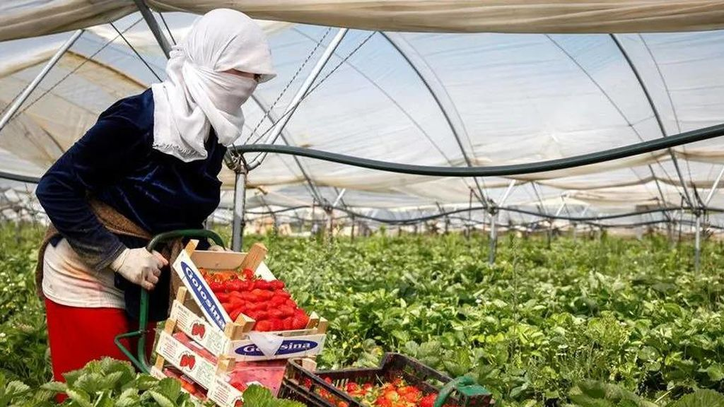 1.200 temporeras marroquíes podrán volver a casa este sábado