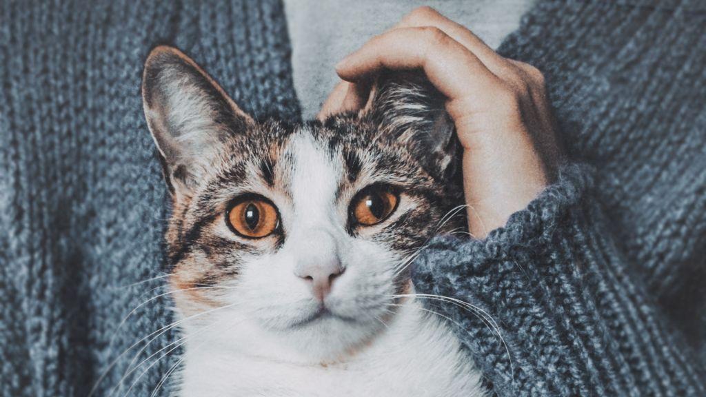 A ti te encantan, pero él las odia: cosas que haces y molestan muchísimo a tu gato
