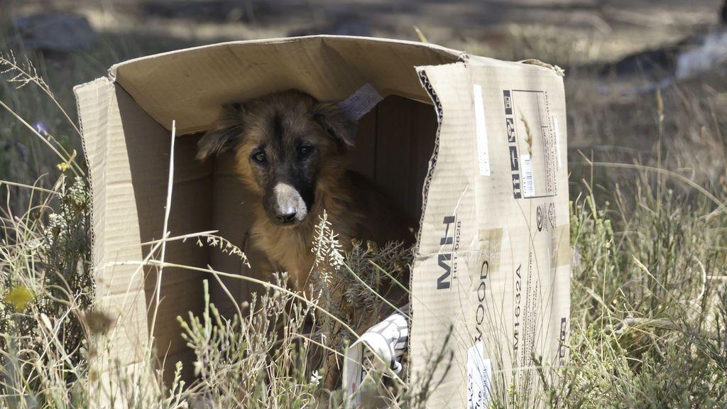 Alerta, perro abandonado: qué hacer si te encuentras uno por la calle
