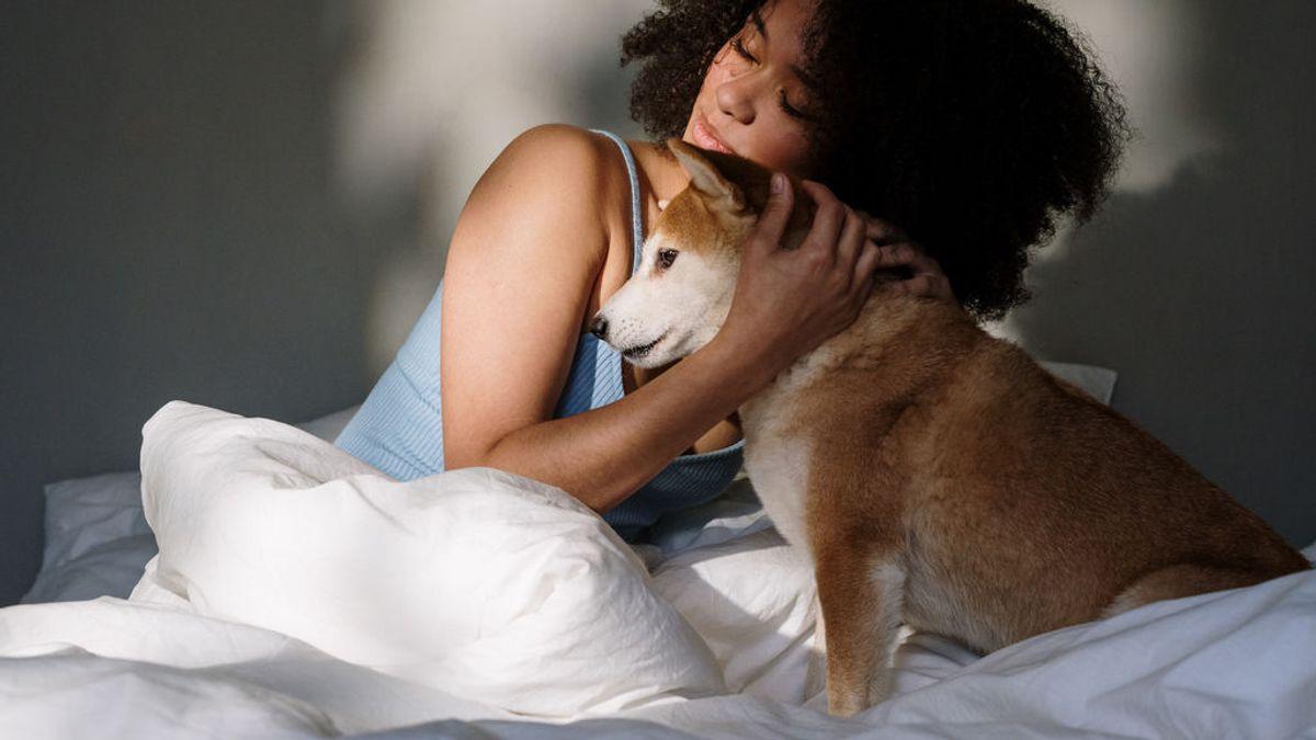 Costumbre o malos hábitos: motivos por los que tu perro tiene su espacio seguro debajo de tu cama