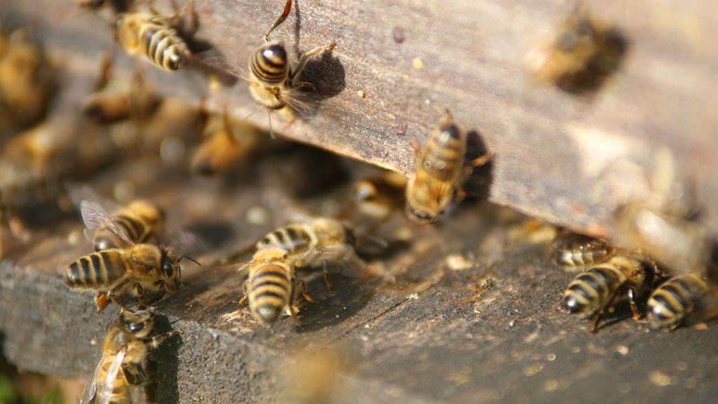 Un enjambre de abejas bloquea el acceso a un edificio de una ciudad rusa y no deja entrar a los vecinos