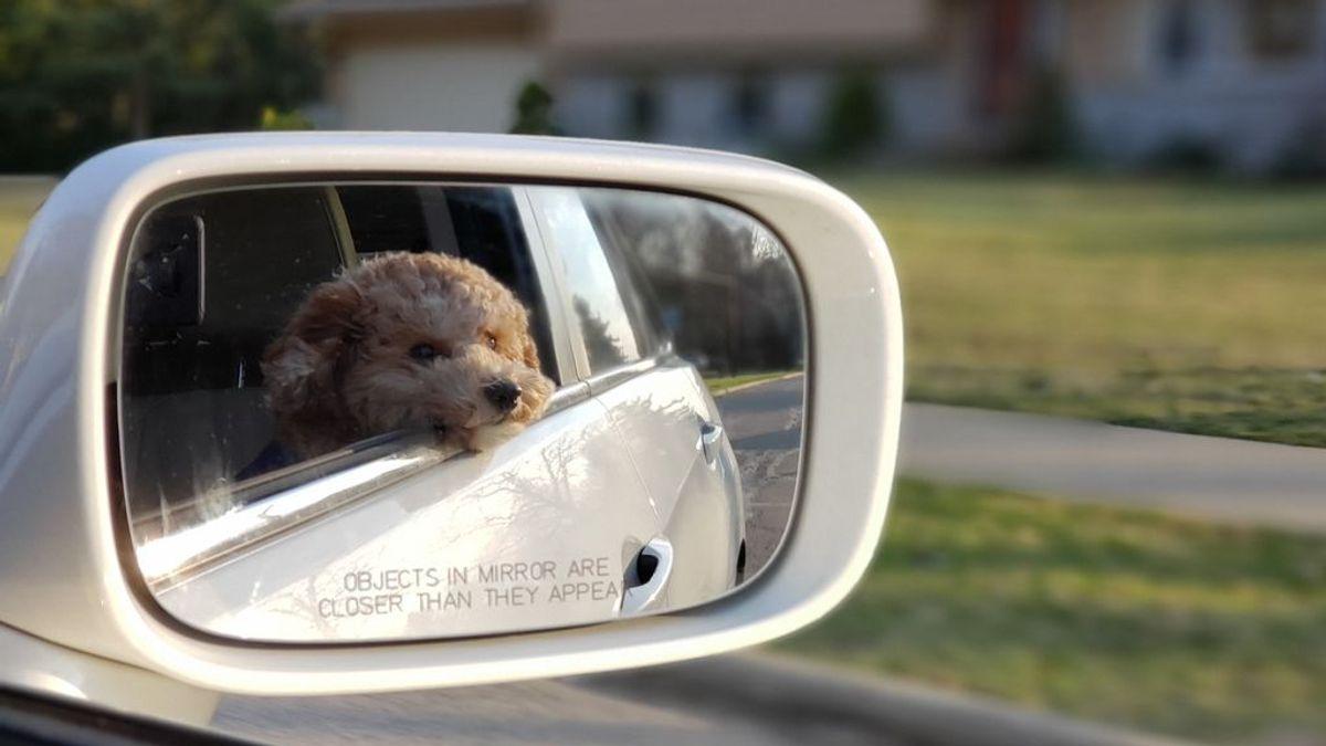 Seis minutos bastan para acabar con su vida: en verano, nunca dejes al perro en el coche