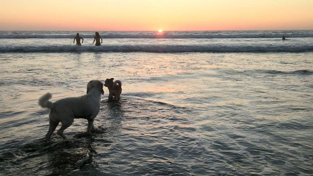 Un chapuzón en la playa con tu mejor amigo: lista de calas españolas que permiten el acceso a los perros