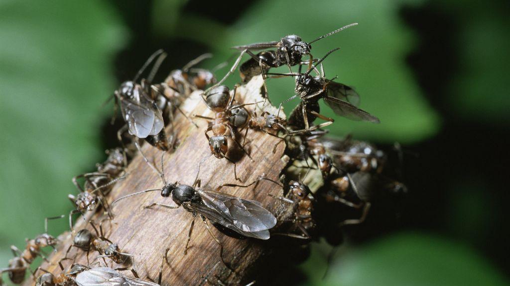 No es lluvia, son hormigas voladoras: la inusual captura de un radar meteorológico en el sur de Inglaterra
