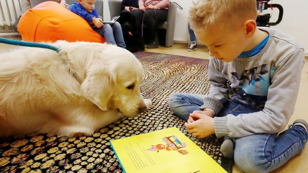 Día Mundial del Perro: los canes retoman su ayuda terapéutica y educacional tras el confinamiento
