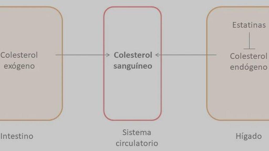 colestrelos conversation