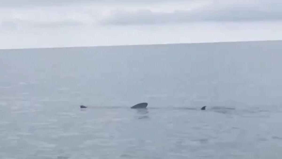 Tres tiburones provocan la bandera roja en una playa de Tarragona