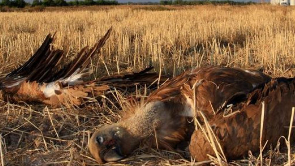 Tudela, Zaragoza, Bunyola y Albacete los puntos negros de envenamiento de animales