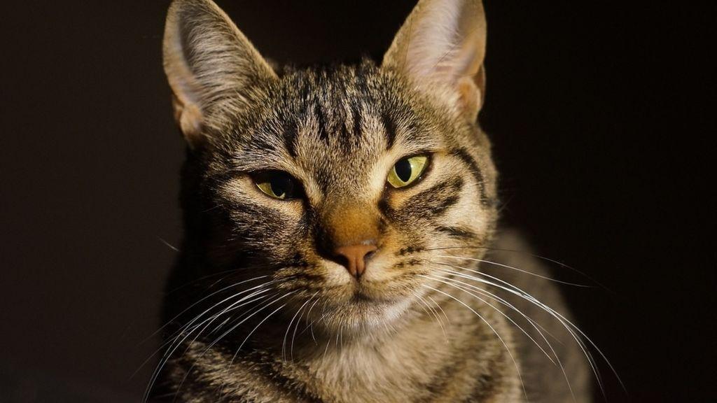 La explicación de un experto a por qué los gatos parpadean lento frente a sus dueños