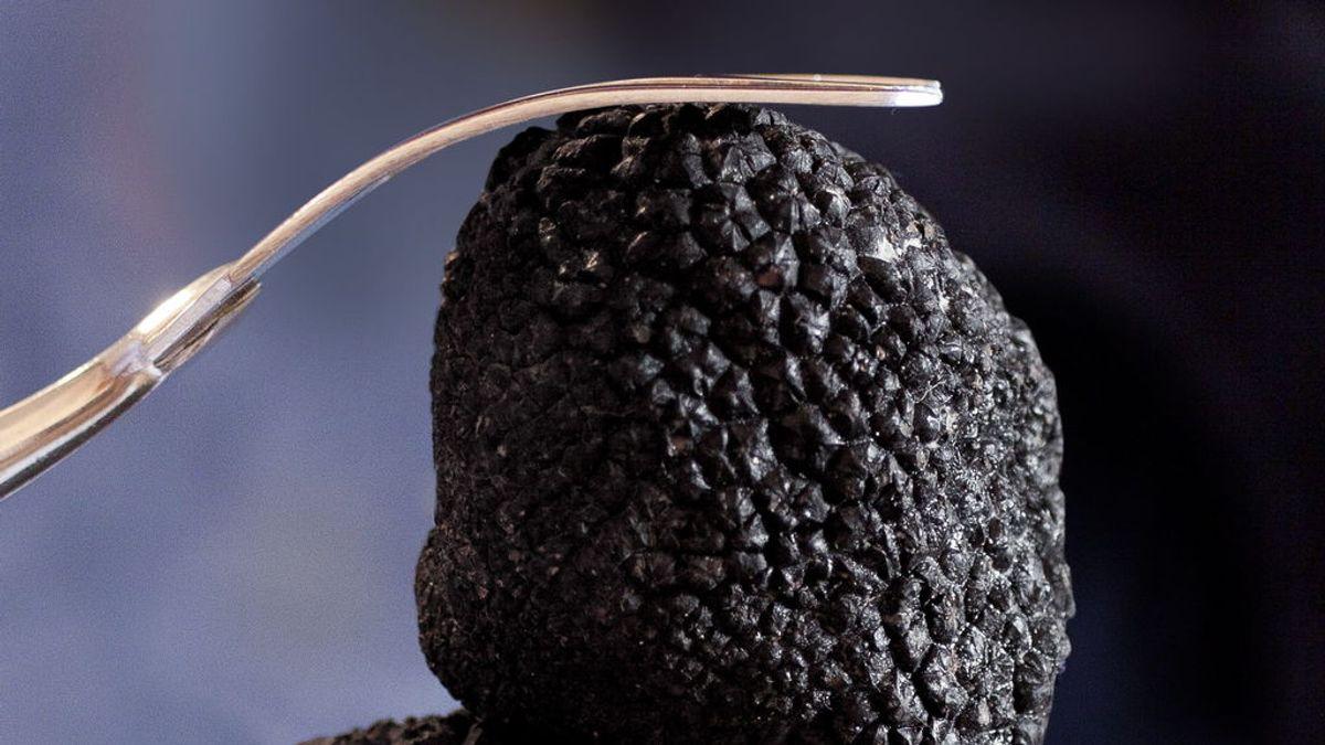 Trufa negra