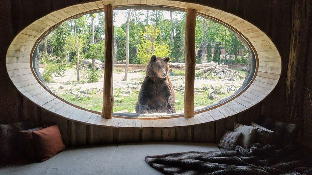 El hotel más salvaje del mundo: habitaciones de lujo entre osos y morsas