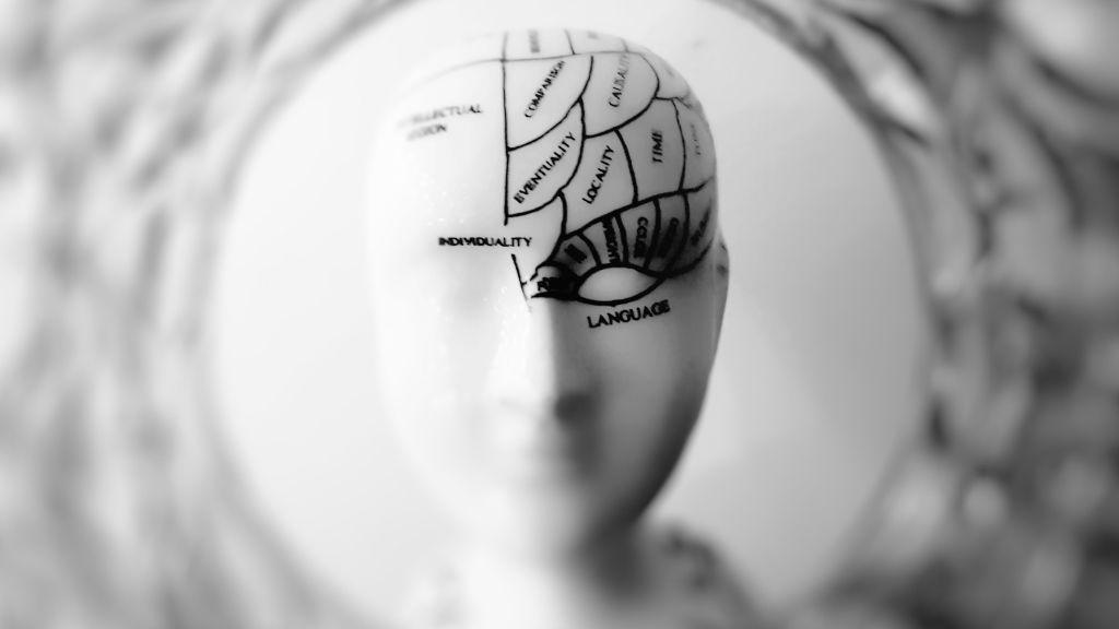 Los compartimentos del cerebro tienen cada uno su misión