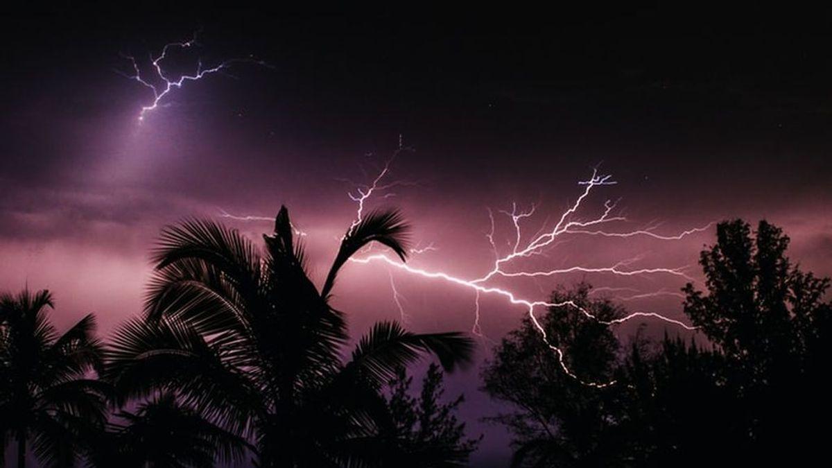 El enemigo silencioso: los rayos dañan 832 millones de árboles al año