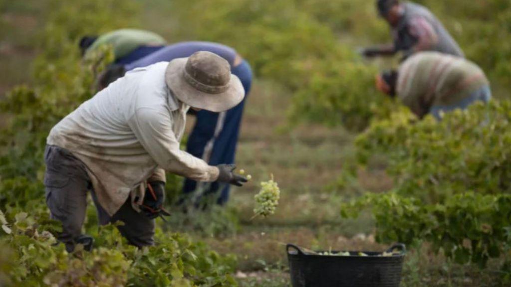 Guía anti covid en fincas agrícolas: mascarillas, alojamientos limpios y se limitarán las visitas a los temporeros