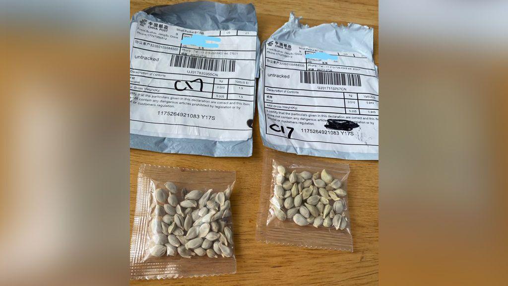 Misterio y alerta en EEUU: paquetes con semillas procedentes de China están llegando a las casas sin que lo pidan
