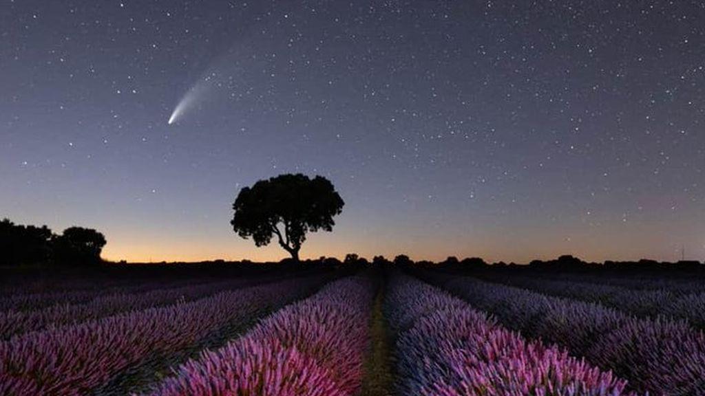 Campos de lavanda de Brihuega y Neowise: las instantáneas que deja el cometa más visible de 2020