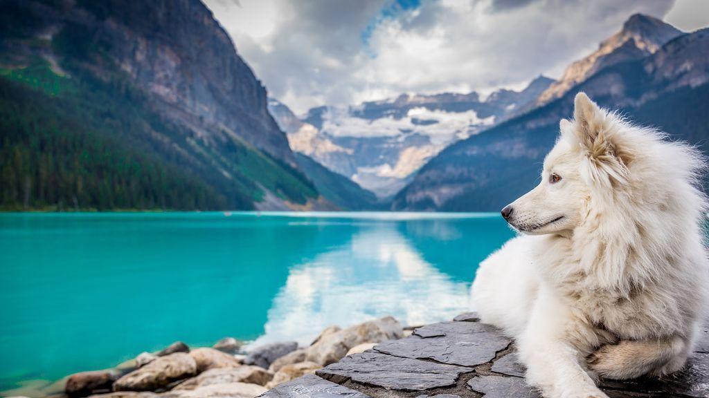 Doga, dogtrekking y agility. Descubre qué deportes puedes hacer con tu perro en verano