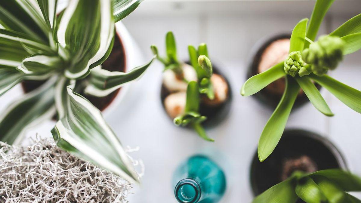 6 plantas de interior que filtran el aire de tu hogar y generan oxígeno
