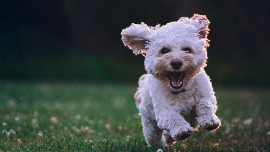 Mascotas y nueva normalidad, como ayudarles