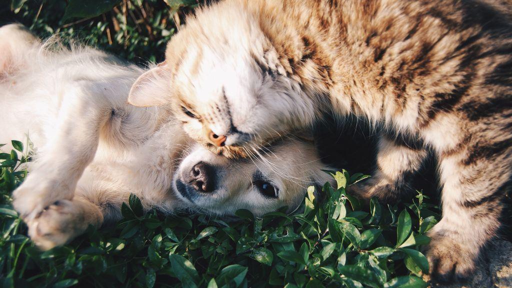 Atragantamientos y otros problemas: cómo actuar si tu mascota se asfixia mientras come