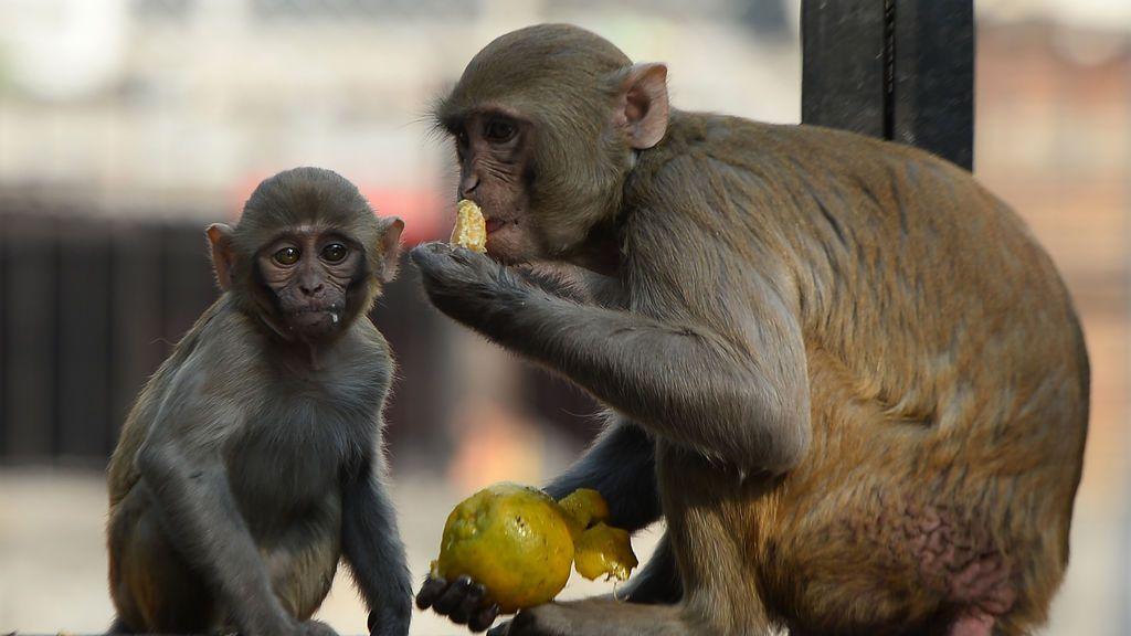 La ventaja de la vacuna de Johnson&Johnson: una sola dosis demuestra eficacia en macacos