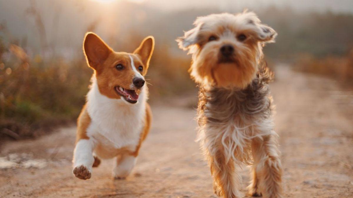 La esterilización en mascotas, un proceso sencillo y económico con muchos beneficios