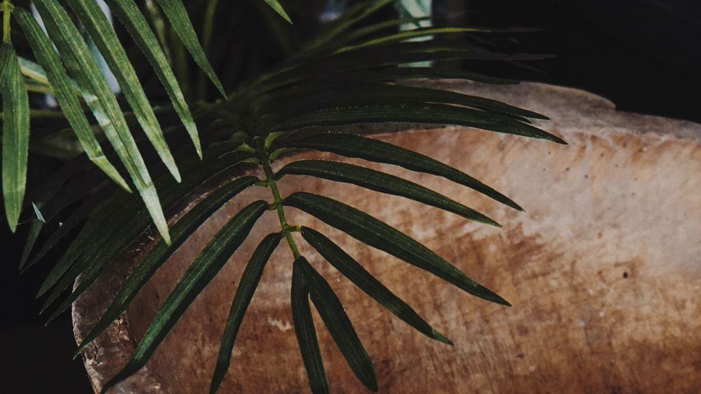 Foto de Nadi Lindsay en Pexels palmera interior