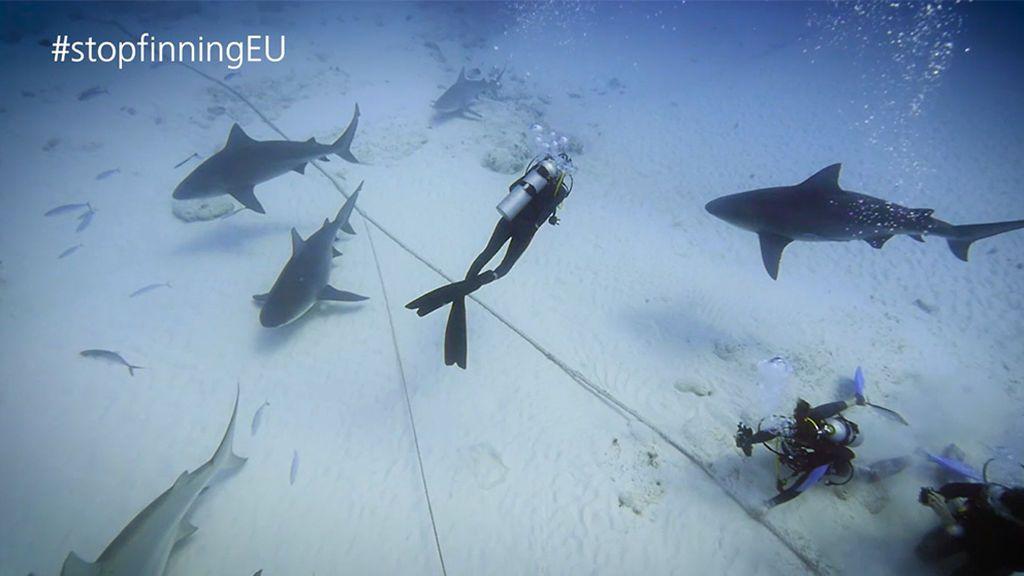 ¿Cuántos tiburones nos quedan?