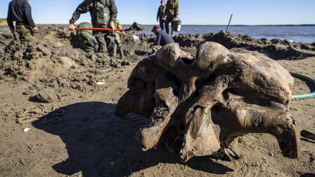 Restos de mamut encontrados en Siberia: el calor extremo desvela los secretos del permafrost