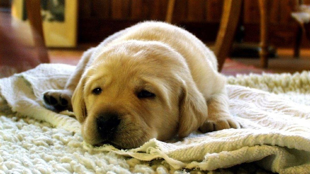 Las alfombras de enfriamiento, el producto estrella para que proteger a tu mascota del calor