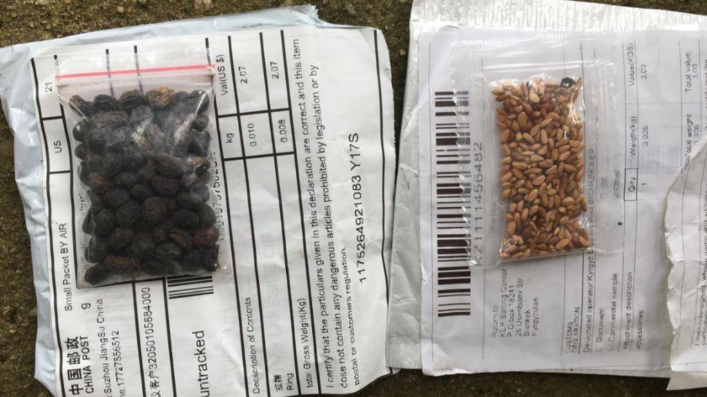 Identifican las semillas que recibieron ciudadanos de EEUU enviadas desde China