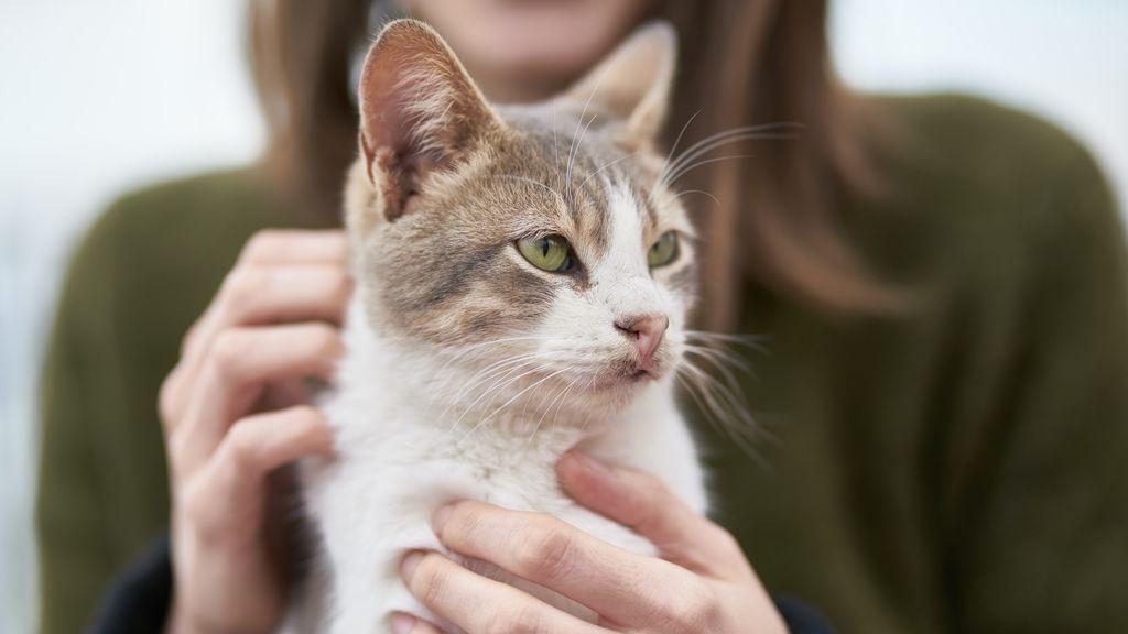 """""""Es solo un animal"""": 5 frases que no debes decir a alguien que ha perdido a su mascota"""