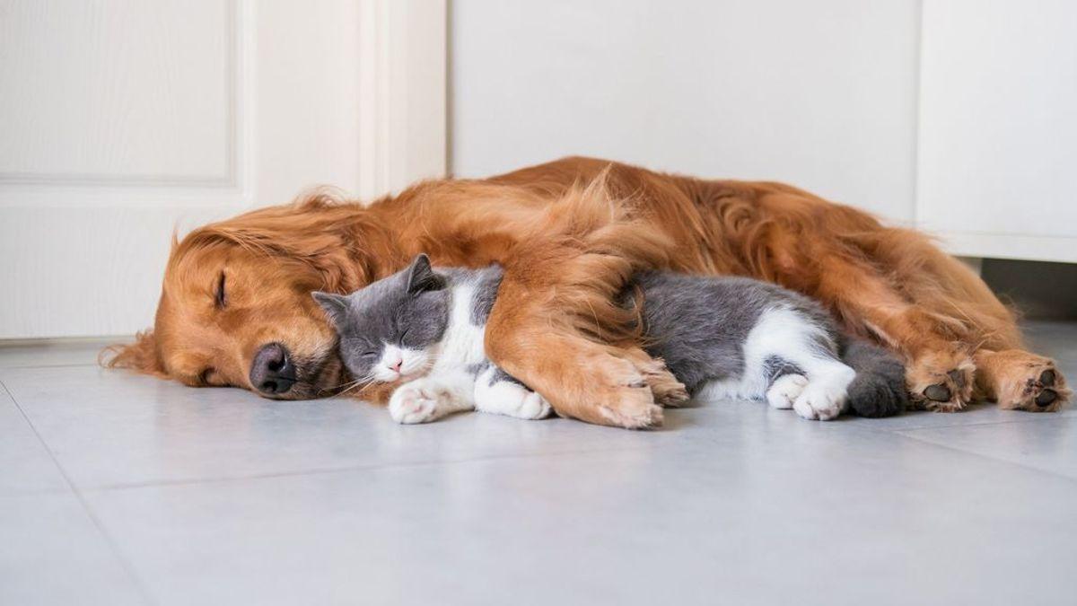 Casi un 4 % de los perros y gatos que conviven con contagiados de COVID-19 han desarrollado anticuerpos