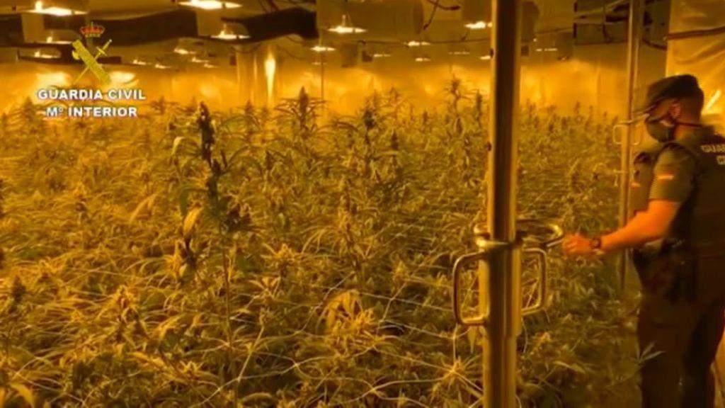 La Guardia Civil desmantela tres plantaciones de marihuana, en tres mansiones de San Juan