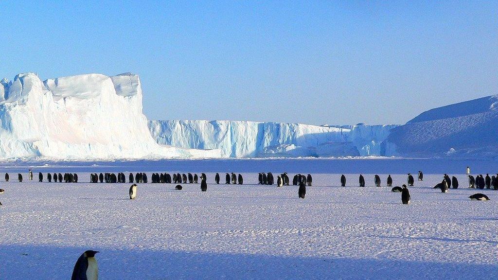 penguins-429136_960_720