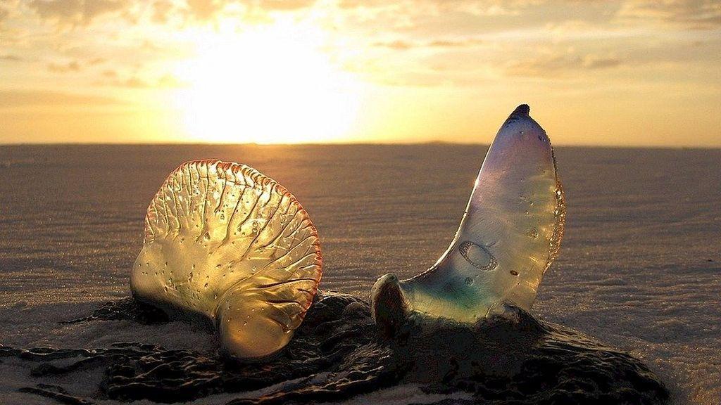 Playa y medusas: lo que hay que hacer cuando pican