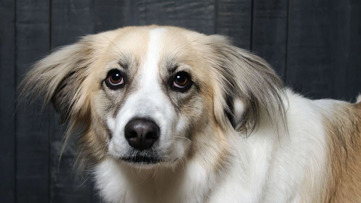 Mi perro vomita espuma blanca, conoce las posibles causas y tratamientos