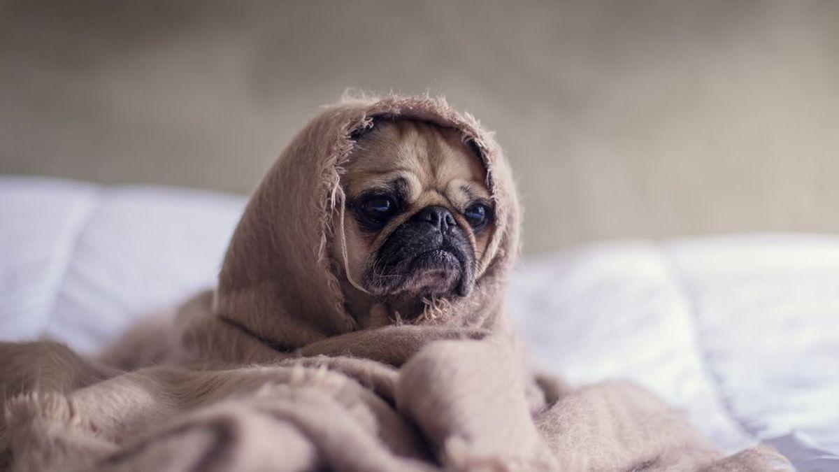 Cuidado con tu perro y la terraza en verano, puede ser un espacio inseguro.