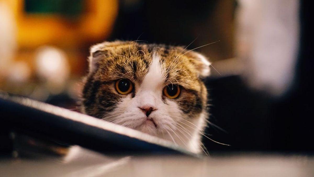 Falta de apetito, cansancio e inactividad: las señales que nos advierten de que nuestro gato está deprimido